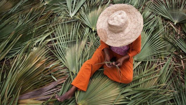 Artesão tecendo palha de carnaúba, sentada sobre as folhas frescas da árvore. Ela veste uma roupa laranja e um chapéu de palha feito por ela.